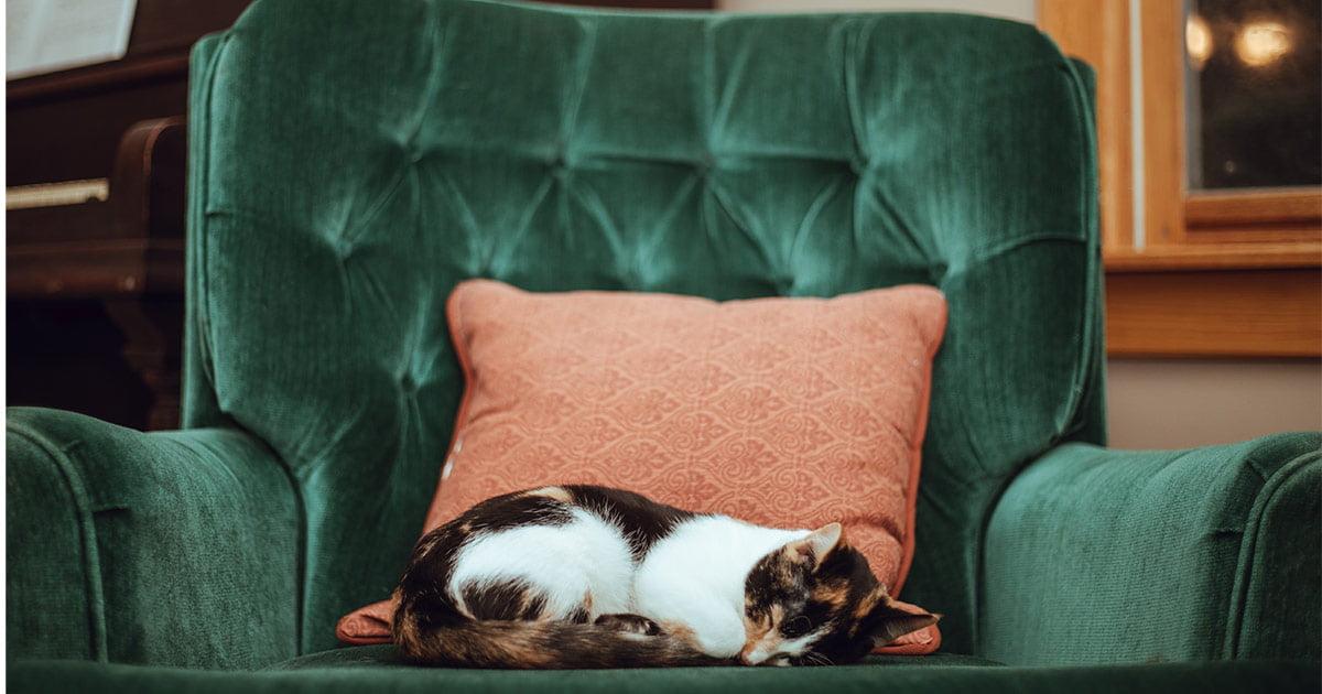 Gatto di casa si adegua alle misure restrittive e cambia la sua vita dello 0,002%