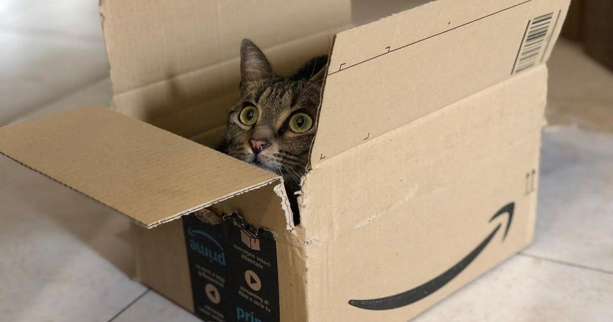 Amazon inserisce genoma di gatto nelle merci da spedire per farle entrare da sole nelle scatole